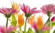 Leinwandbild Motiv spring garden 3