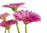 spring garden 4 - 2810222