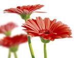 spring garden 6 - 2810256