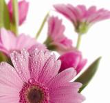spring garden 8 - 2810258