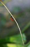 ladybird precarious climb to the top poster