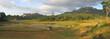 ricefields from londa to kete kesu, rantepao, sulawesi island, i