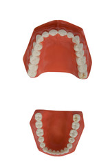 dentures, dental prosthesis