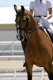 equestrian riding - dressage poster