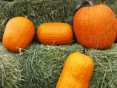 pumpkins and hay