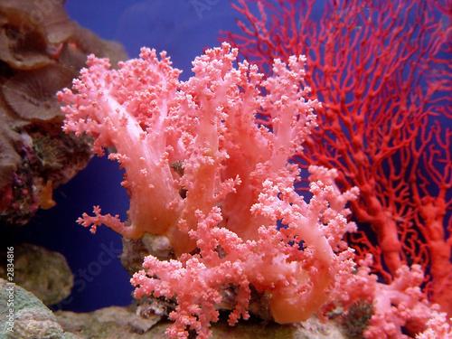 Leinwanddruck Bild beautiful coral