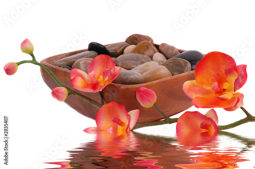 - orchid and pebbles - plakaty