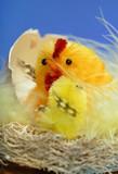homemade chicks poster