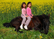 jumelles a cheval