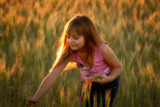 young girl collecting stalks of wheat with long brown hair poster