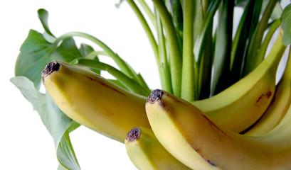 plátanos tropicales
