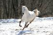 Quadro skipping white horse