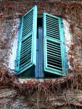 piante a protezione della finestra