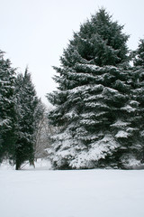 winter landscape, beautiful snow in the forest