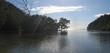 mangrove sea swamps, togians island, sulawesi, indonesia, panora