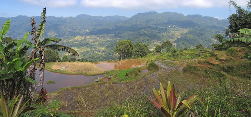 ricefields and mountains, rantepao, sulawesi island, indonesia,