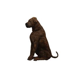 mastiff - 01