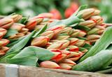 bin of fresh tulips poster