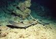 weissspitzen-riffhaie in höhle