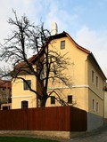 : native house of  the sigmund freud