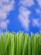 green grass straws