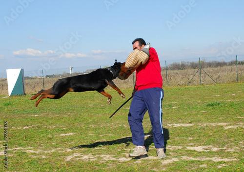 poster of attaque de rottweiler