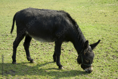 donkey in the grass