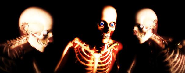 human bones 101