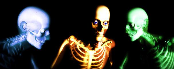 human bones 112