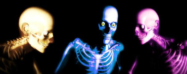 human bones 114