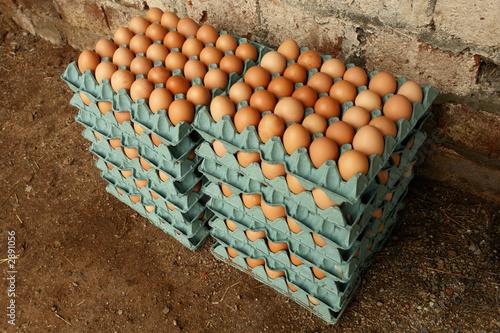 Huevos en bandejas de carton 3 de alexander bedoya imagen for Bandejas para huevos