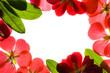 red flower frame over white background