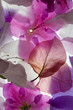 backlit flowers background