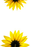 blank white page decorated with sunflower details