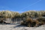 protection de la dune poster