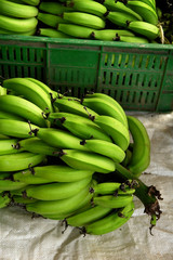 bananos platanos 2