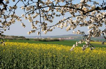 campagne bourguignonne
