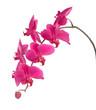 Fototapete Jahrestag - Hintergrund - Blume
