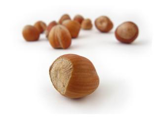 hazel nuts