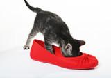 snoop in slipper poster