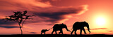 Fototapety family of elephants