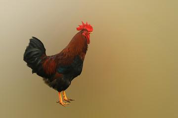 cock-boss