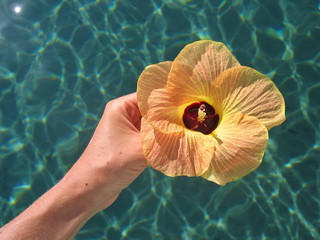 rare tropical flower over a blue sea, togians island, sulawesi,