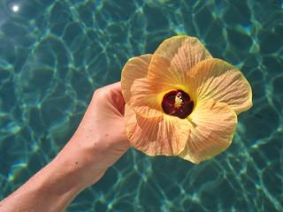 rare tropical flower over a blue sea, togians island, sulawesi,