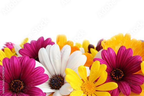 spring daisy border