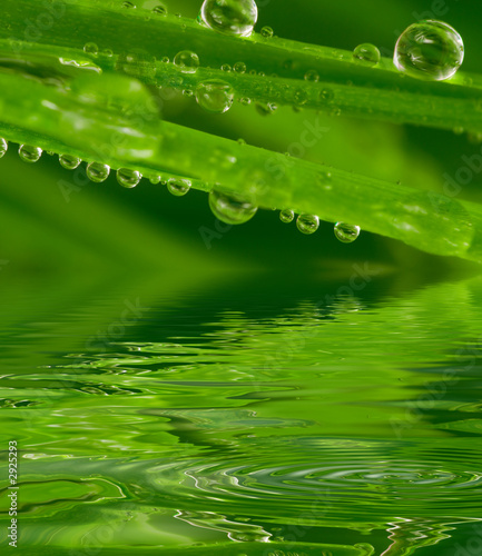 canvas print picture fresh grass with dew drops