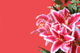 pink lily postcard poster