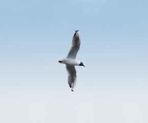 bird aero aerobatics