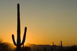 sunset in arizona poster