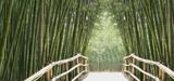Fototapety bambusallee